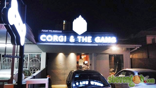 corgi_n_the_gang1